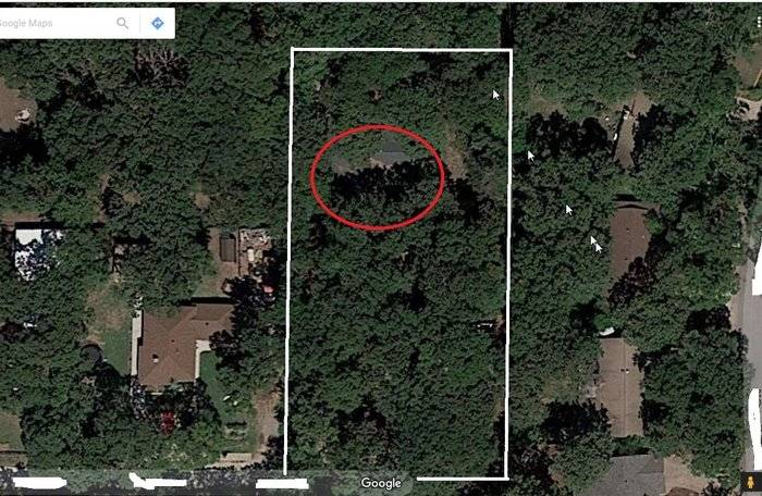 BudWs Forest.JPG