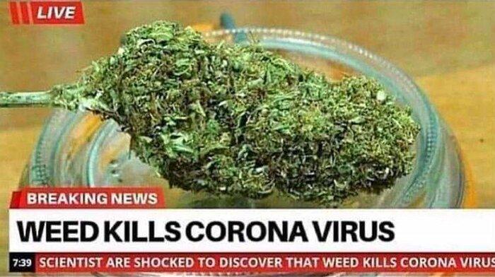 weedkillscoronavirus.jpg