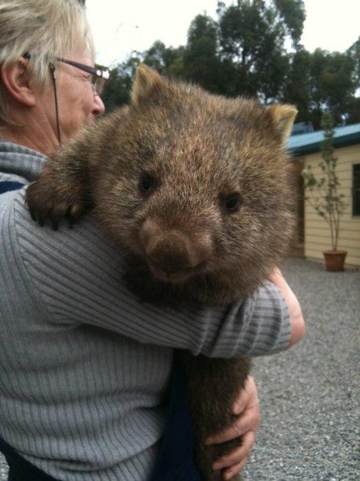 wombat+Bonney+003.jpg